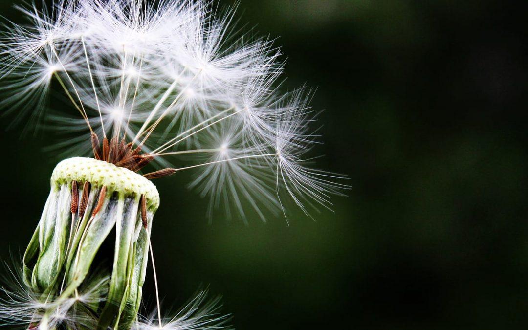 Was die Politik tun kann um Allergiker zu unterstützen